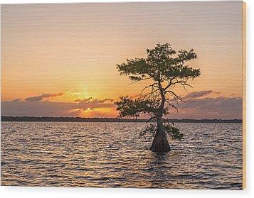 Blue Cypress Lake Sunrise Wood Print by Claudia Domenig