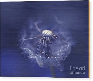 Blue Dandy Wood Print by Sharon Talson