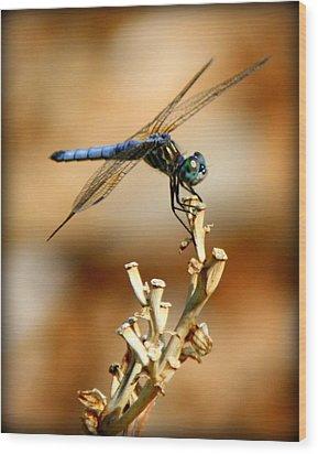 Blue Dragonfly Wood Print by Tam Graff