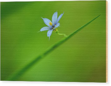 Wood Print featuring the photograph Blue-eyed Grass by JD Grimes