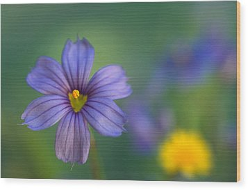 Blue Eyed Grass Wood Print by Kathy Yates