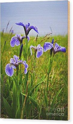 Blue Flag Iris Flowers Wood Print by Elena Elisseeva