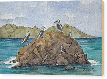 Blue Footed Boobies In Galapagos Wood Print by Bonnie Sue Schwartz