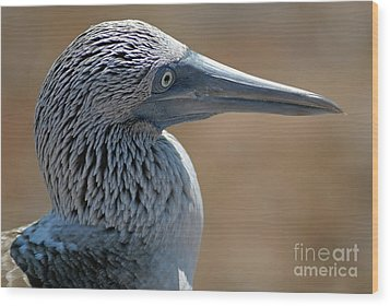Blue-footed Booby Wood Print by Sami Sarkis