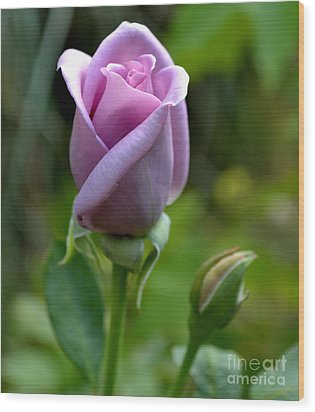 Blue Girl Rose-03 Wood Print by Eva Thomas