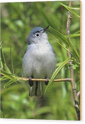Wood Print featuring the photograph Blue-gray Gnatcatcher Dsb147 by Gerry Gantt