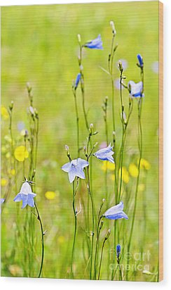Blue Harebells Wildflowers Wood Print by Elena Elisseeva