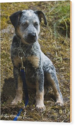 Blue Heeler Pup Wood Print by Tyra  OBryant