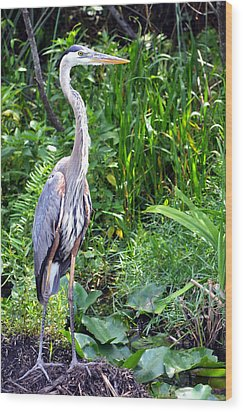 Wood Print featuring the photograph Blue Heron At The Everglades by Pravine Chester