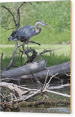 Wood Print featuring the photograph Blue Heron At The Lake by Debbie Hart