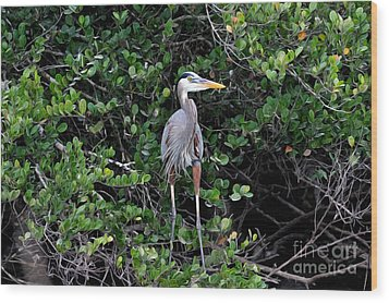 Wood Print featuring the photograph Blue Heron In Tree by Dan Friend