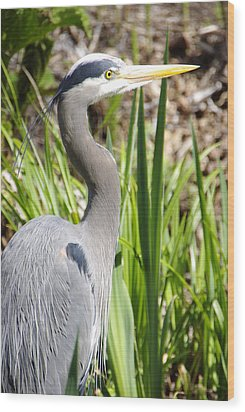 Wood Print featuring the photograph Blue Heron by Marilyn Wilson