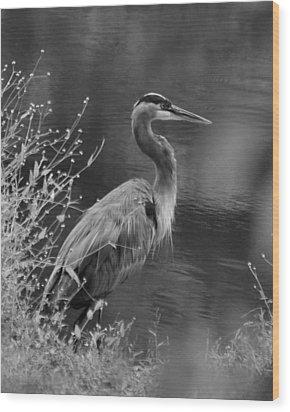 Blue Heron Observing Pond - 51006955m  Wood Print by Paul Lyndon Phillips