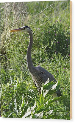 Wood Print featuring the photograph Blue Heron by Tannis  Baldwin