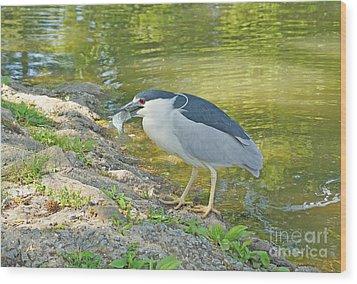 Blue Heron With Fish Wood Print