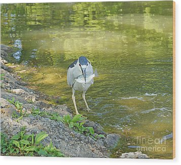 Blue Heron With Fish One Wood Print