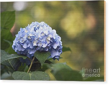 Wood Print featuring the photograph Blue Hydrangea by Denise Pohl