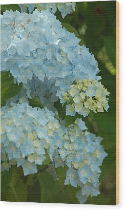Blue Hydrangeas Wood Print by Peg Toliver