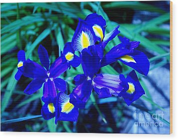 Wood Print featuring the photograph Blue Iris by AmaS Art