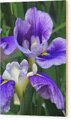 Blue Irises Wood Print by Deborah  Crew-Johnson