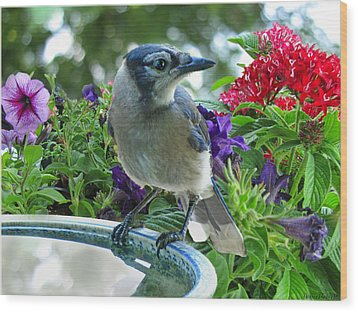 Wood Print featuring the photograph Blue Jay At Water by Debbie Portwood