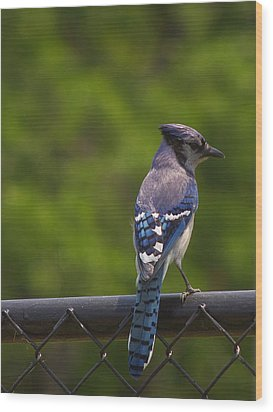 Blue Jay Wood Print by Billy  Griffis Jr