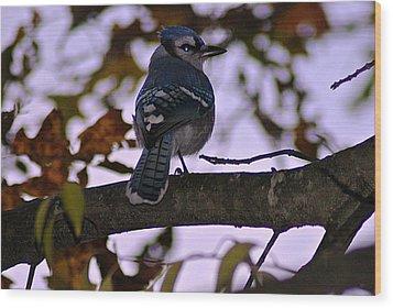 Blue Jay Wood Print by Joe Faherty