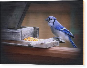 Wood Print featuring the photograph Blue Jay On Backyard Feeder by Kay Novy