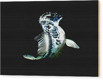 Blue Koi On The Rise Wood Print by Don Mann