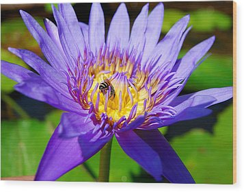 Blue Lotus And Honey Bee Wood Print