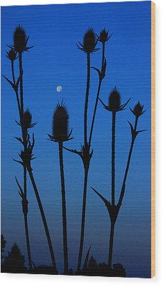Blue Moon Thistle Wood Print by Kimberleigh Ladd