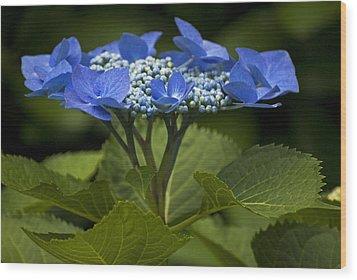 Blue Morning Wood Print by Elsa Marie Santoro
