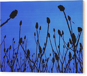 Blue Morning Wood Print by Todd Sherlock