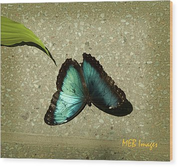Blue Morpho 1 Wood Print