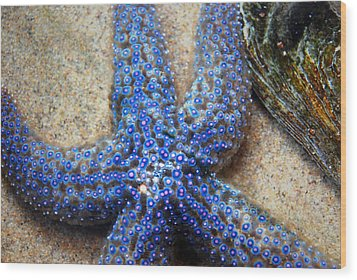 Blue Starfish Wood Print