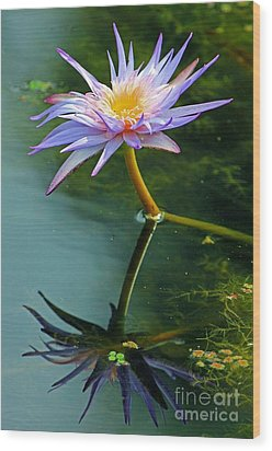 Blue Stargazer Lily Wood Print by Larry Nieland