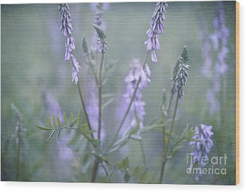 Blue Vervain Wood Print by Priska Wettstein