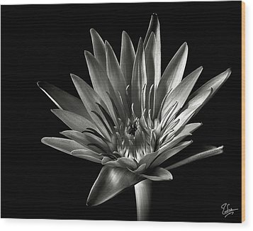 Wood Print featuring the photograph Blue Water Lily In Black And White by Endre Balogh