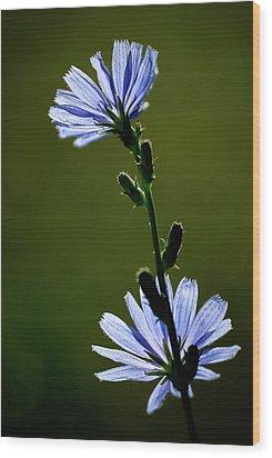 Blue Wildflower Wood Print by  Onyonet  Photo Studios