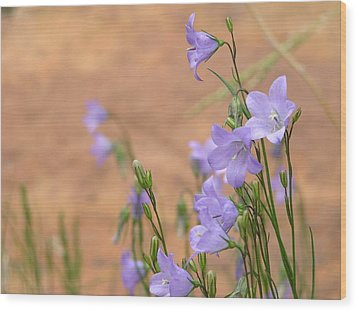 Bluebells And Red Rock Wood Print