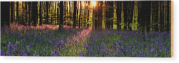 Wood Print featuring the photograph Bluebells In Morning Sun  by John Chivers