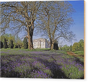 Bluebells In The Pleasure Grounds, Emo Wood Print by The Irish Image Collection