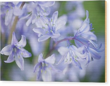 Bluebells Wood Print by Nick Dolding