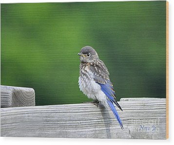 Wood Print featuring the photograph Bluebird Baby by Nava Thompson