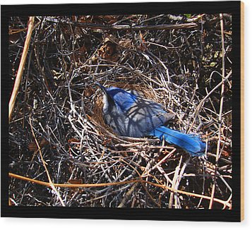 Wood Print featuring the photograph Bluebird In Her Nest by Susanne Still