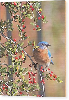 Bluebird In Yaupon Holly Tree Wood Print by Jeanne Kay Juhos