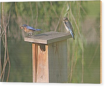 Bluebird Snack Time Wood Print by Jeanne Kay Juhos