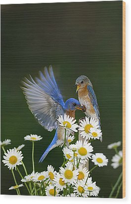 Wood Print featuring the photograph Bluebirds Picnicking In The Daisies by Randall Branham