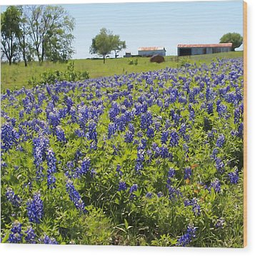 Bluebonnet Farmhouse Wood Print by Lynnette Johns