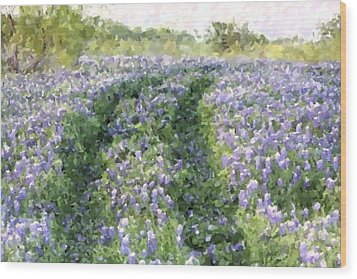 Bluebonnet Trail Wood Print